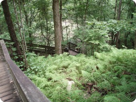 Devil's Millhopper Sinkhole Steps